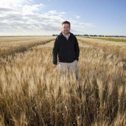 Wheat Genome Sequencing Soon to be Released Across the Globe