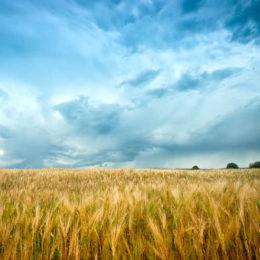 Barley Genome Cracked: A Scientific Breakthrough