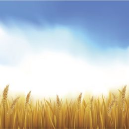 LCRC to Register First Wheat Varieties