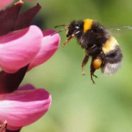The Industry is Stepping Up to Protect Pollinators