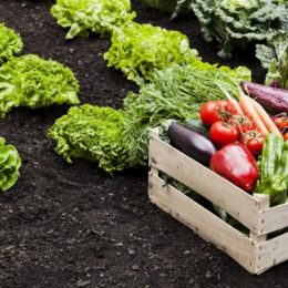 Not Enough Fruits, Vegetables Grown to Feed the Planet, U of G study reveals