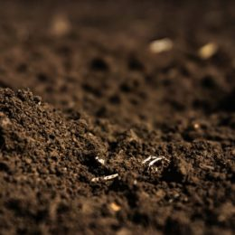 A Late Spring Means More Reasons for Using Seed Treatment